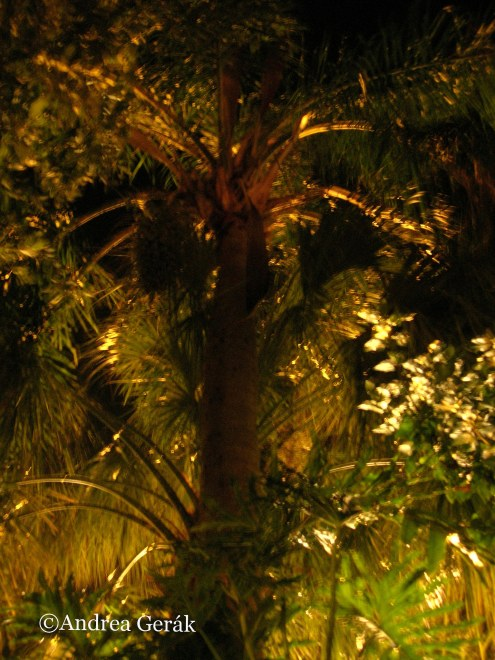 Palm tree in the night