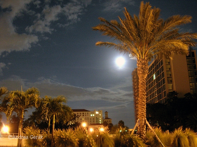 Clearwater night with palm tree